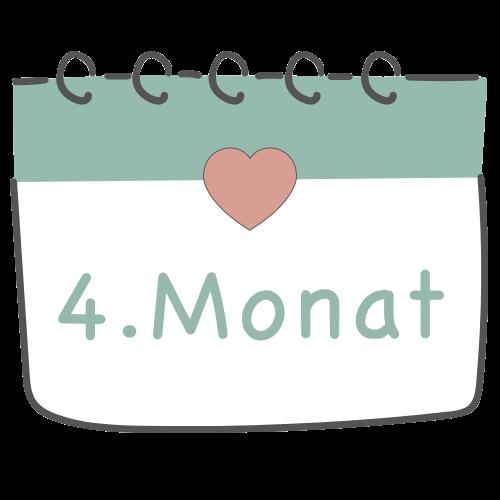 4. Schwangerschaftsmonat