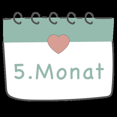 5. Schwangerschaftsmonat